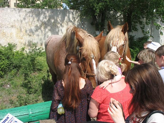Лошади на Саратовском ипподроме