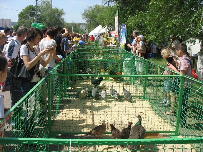 Птицы на выставке на Саратовском ипподроме.
