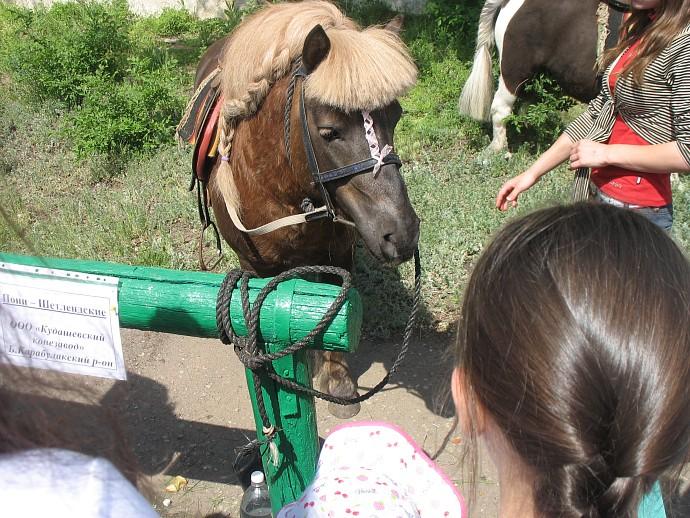 Пони на Саратовском ипподроме